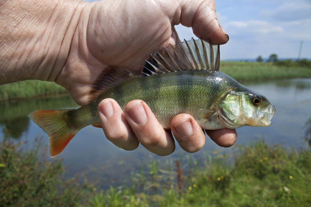 river-fish-1164953